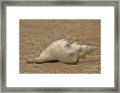 Framed Print featuring the photograph Summertime by Anne Rodkin
