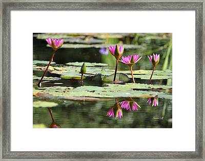 Summertime Magic Framed Print by Suzanne Gaff