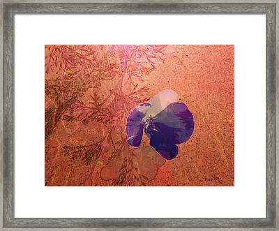 Sun And Shadow Framed Print by Phil Vooz