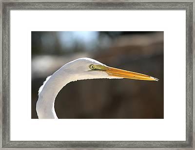Sun Basker Framed Print