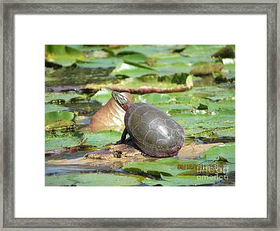 Sun Bath Framed Print by Thomas Sterett