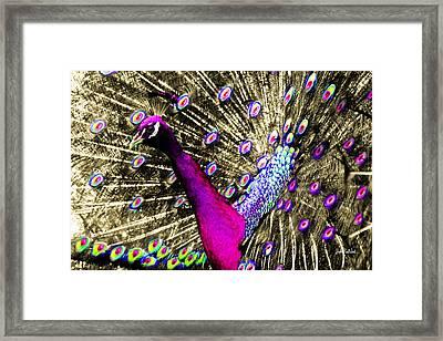 Sun Beam Peacock Framed Print by Stephen Paul West