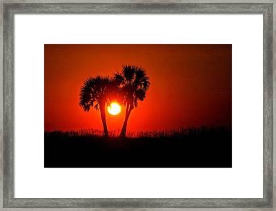 Sun Between 2 Palms Framed Print by Michael Thomas