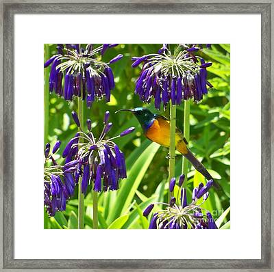 Framed Print featuring the photograph Sun Bird by Lynn Bolt