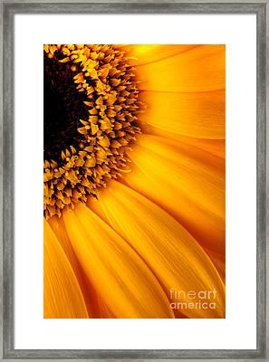 Sun Burst - Sunflower Framed Print by Martin Williams