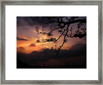 Sun Caught By Branches  Framed Print by Rosvin Des Bouillons