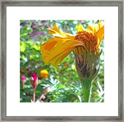 Sun Dappled Marigold And Geranium Flowers Framed Print by Padre Art