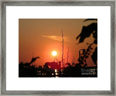 Sun Down Framed Print by Laurence Oliver