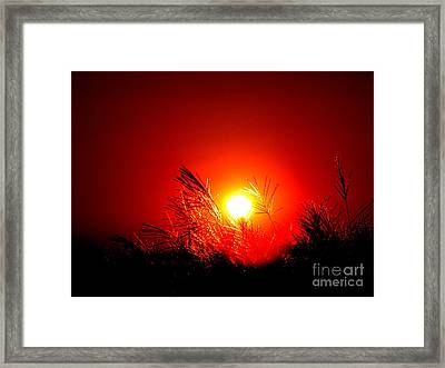 Sun Drop Framed Print by Laurence Oliver