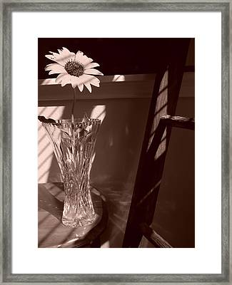Framed Print featuring the photograph Sun In The Shadows by Lynnette Johns