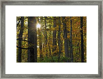 Sun In Trees Framed Print by Helen Haw