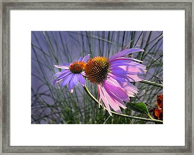 Framed Print featuring the photograph Sun Kissed Cones by Nava Thompson