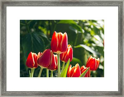Sun Kissed Framed Print by Peter Chilelli