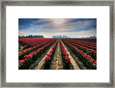 Sun Kissed Tulips Framed Print