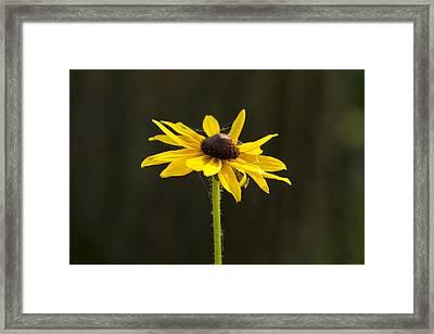 Sun Lit Framed Print by Dean Bennett