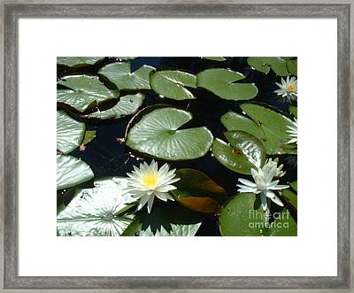 Sun Lovers Framed Print