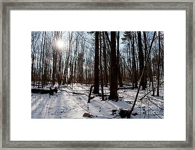 Sun On The Wild Turkey Trail Framed Print by Gary Chapple