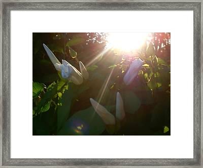 Sun Peak Framed Print by Lee Yang