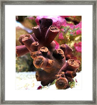Framed Print featuring the photograph Sun Polyps by Puzzles Shum