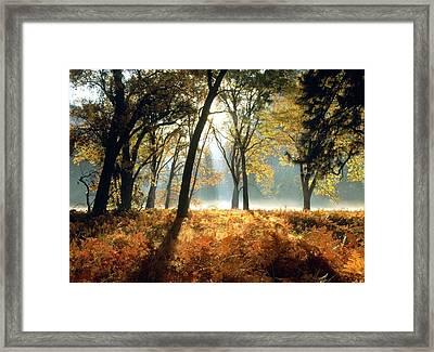 Sun Rays Passing Through Golden Trees  Framed Print by ilendra Vyas