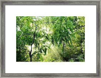 Sun Rays Through Black Walnut Leaves Framed Print by Thomas R Fletcher