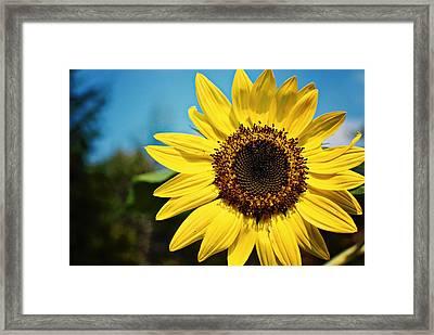 Sun Framed Print by Robin Morse