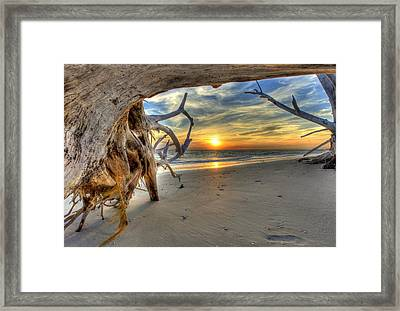 Sun Setting Under The Tree Framed Print