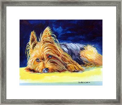 Sun Spot Yorkshire Terrier Framed Print
