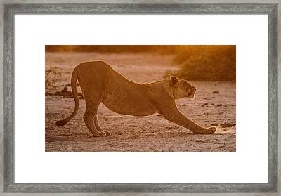 Sun Stretch Framed Print