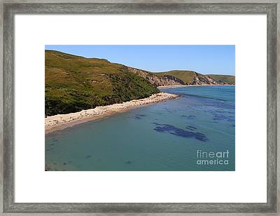 Sunbathing Elephant Seals Along A Beach At Point Reyes California . 7d16058 Framed Print by Wingsdomain Art and Photography