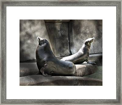 Framed Print featuring the photograph Sunbathing Seals by Mary Almond