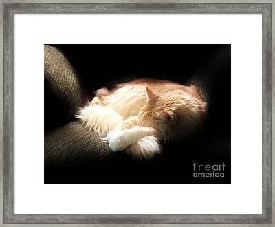 Sunbeam Dreams Framed Print by Judy Via-Wolff