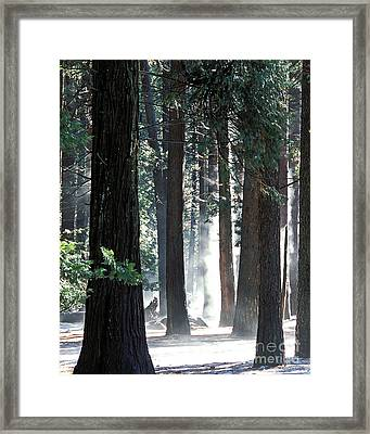 Sunbeams Through The Trees Yosemite National Park Color Framed Print