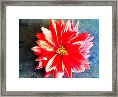 Framed Print featuring the photograph Sunburst by Janice Spivey