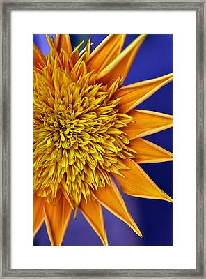 Sunburst Framed Print by Sandy Fisher