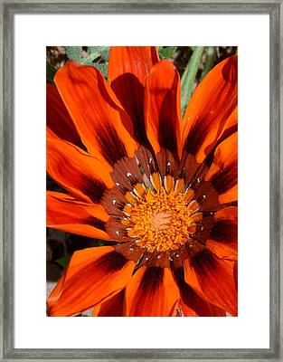 Sunburst Framed Print by Whispering Dove