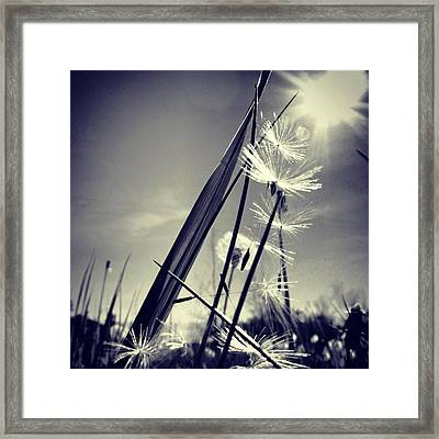 Suncatcher - Instagram Photo Framed Print by Marianna Mills