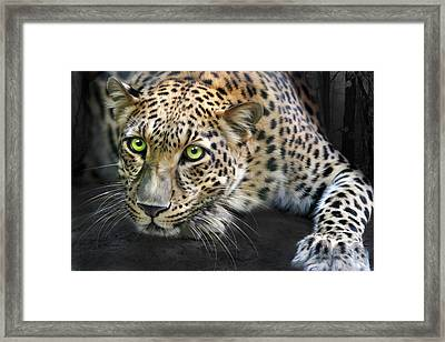 Sundari Framed Print