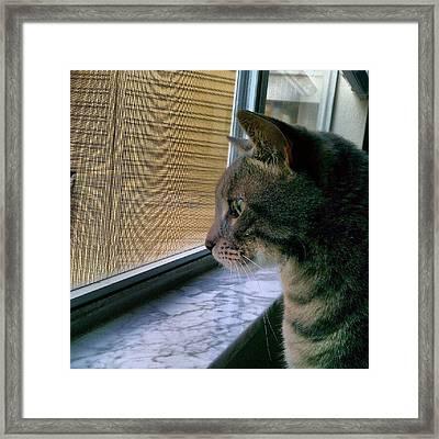 #sunday #cat #kitty #window #gaze Framed Print by Arayon Shaw
