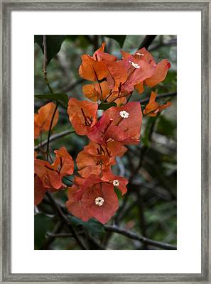 Framed Print featuring the photograph Sundown Orange by Steven Sparks