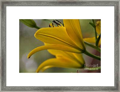 Framed Print featuring the photograph Sundrenched by Tamera James