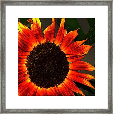 Framed Print featuring the photograph Sunfire by Ramona Johnston