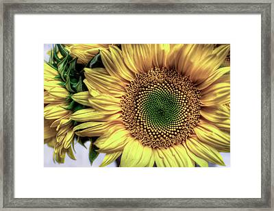 Sunflower 28 Framed Print by Natasha Bishop