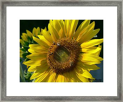 Sunflower 4 Framed Print by EricaMaxine  Price