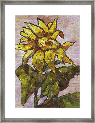 Sunflower 5 Framed Print by Sandy Tracey