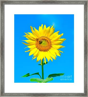 Sunflower And Bee Framed Print by Debbi Granruth