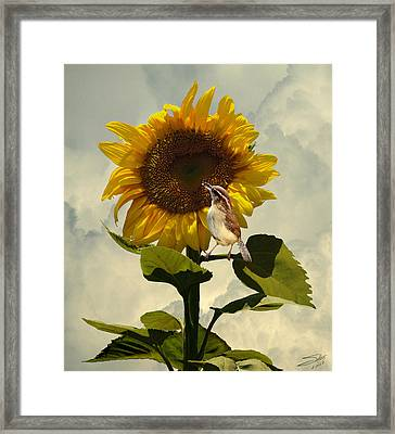 Sunflower And Carolina Wren Framed Print