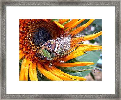 Sunflower And Insect  Framed Print by Jon Baldwin  Art