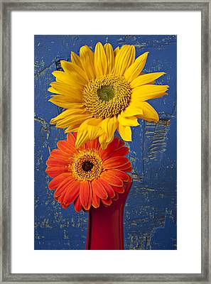 Sunflower And Mum Framed Print by Garry Gay
