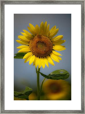 Sunflower Bow Framed Print